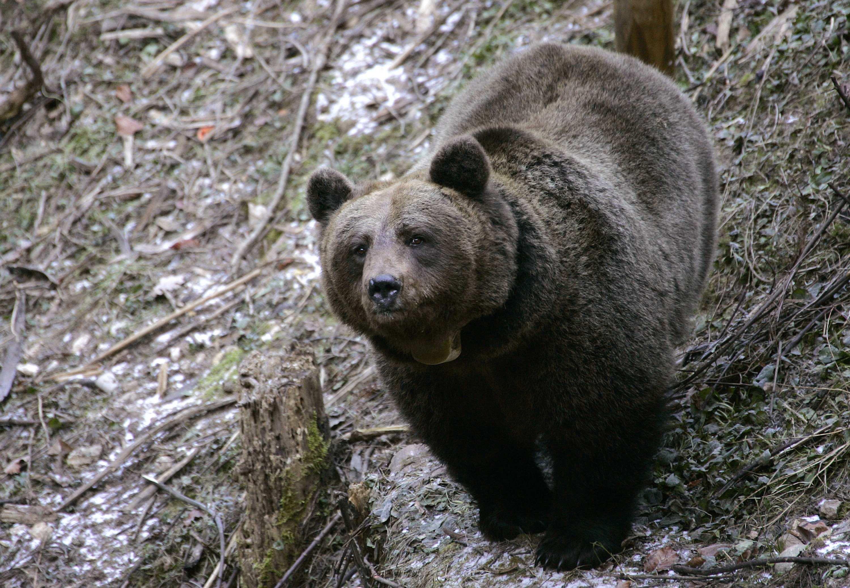 Un esemplare di orso (Reuters)