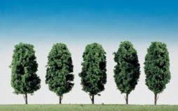Quanta aria pulisce il mio albero