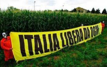 """""""Anche gli scienziati divisi sugli Ogm ecco perché all'Italia conviene dire no"""""""
