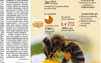 La missione di Obama Curare le piccole api per salvare l'agricoltura