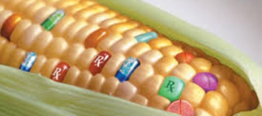 SE PER LE COLTIVAZIONI OGM L'ONERE DELLA PROVA È AL CONTRARIO