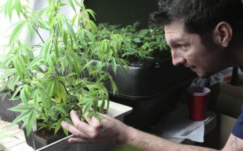 Coltivare la marijuana in vaso non èreato