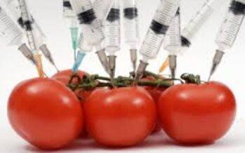 L' OGM mascherato