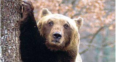 Intorno a noi più lupi, orsi e tonni Italia custode delle specie selvagge