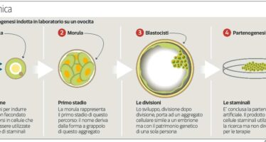 Sugli ovuli non fecondati si possono fare brevetti
