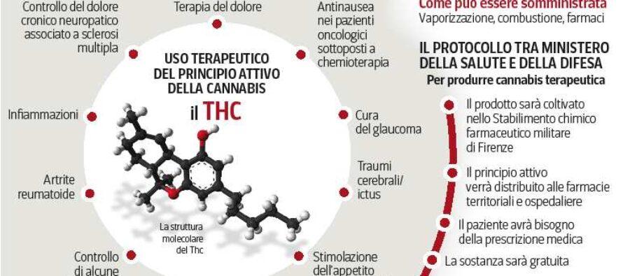Cannabis dai medici di famiglia In Toscana via alle terapie gratuite