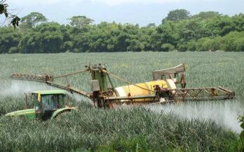 La Svizzera vota il bando ai pesticidi