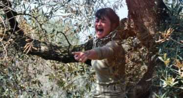 Xylella, il Tar salva di nuovo gli ulivi pugliesi