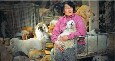 Se anche i cinesi si ribellano alla strage dei diecimila cani