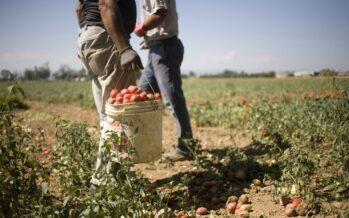 «Solo una limitata emersione dal lavoro nero, serve più coraggio sui migranti»