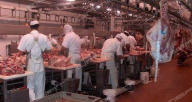 Epidemie zoonotiche. Good Food Campaign: «La carne fa male alla Cina»