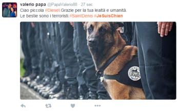 Da manager a terrorista suicida storia di Hasna la prima kamikaze nel cuore d'Europa