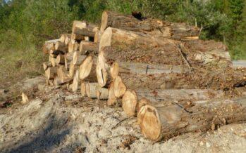 Piano beffa per contenere il Savena: abbattuti 12 km di verde lungo gli argini