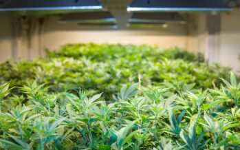 Pot is power hungry: why the marijuana industry's energy footprint is growing