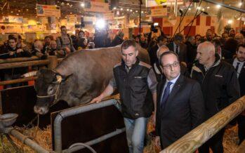 Sterco contro Hollande