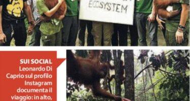 Basta olio di palma La battaglia di Leonardo Di Caprio fa infuriare Giacarta