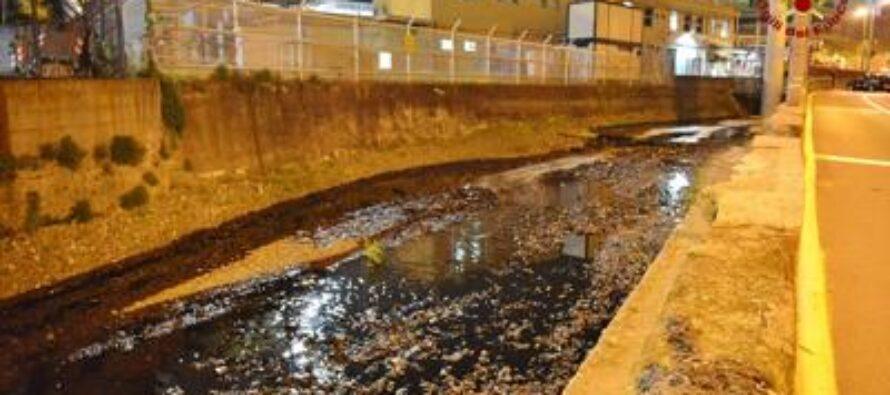 Petrolio, disastro ecologico sul fiume Polcevera