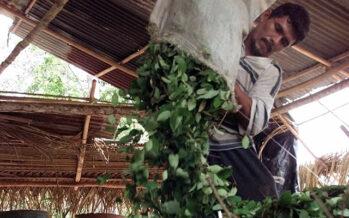 Una nuova visione sulle droghe: Colombia