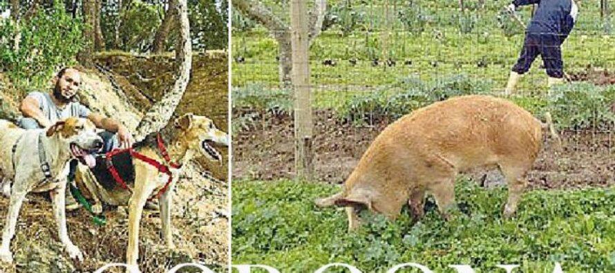 GORGONA. L'ex veterinario della colonia penale e l'appello«Non uccidete gli animali con cui lavoravano i detenuti»