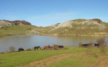 Allarme degli ambientalisti: «La tutela dei parchi è a rischio»