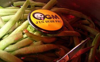 L'agrobusiness della soia OGM
