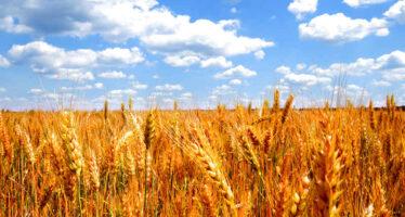 Agricoltura.Allarme Coldiretti: i braccianti stranieri abbandonano il Nord