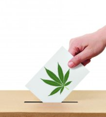 marijuana-voto