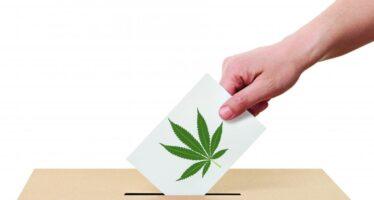 Usa 2016. Marijuana legale, l'altra vincitrice