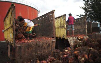 Agricoltura insostenibile. L'olio di palma fa male. Anche ai diritti