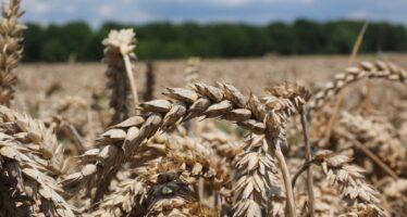 """A Ronco Scrivia i ribelli della campagna: """"Così barattiamo semi per liberare la terra"""""""