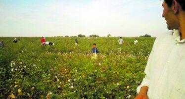 Bangladesh. Dai campi di cotone uzbeki alla boutique, filiera criminale