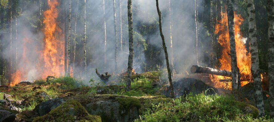 Val di Susa: ecco perché non si riesce a domare il fuoco