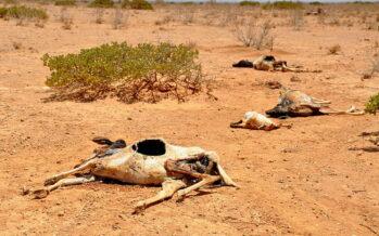 Siccità. Somalia, una fame da morire