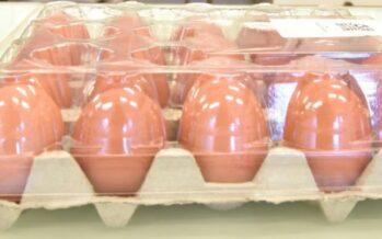 Fipronil, sequestrate dai NAS 92 mila uova
