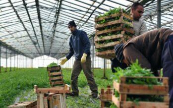 Campagna Flai Cgil: una firma per migliorare la previdenza in agricoltura