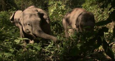 Ecosistemi. I guardiani della foresta senza diritti