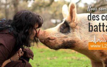 Cambiamento climatico.Per salvare il pianeta bisogna ridurre il consumo di carne
