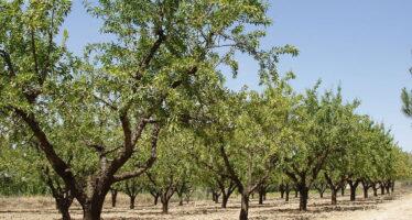Appello per la disobbedienza contro l'obbligo di pesticidi del decreto Martina