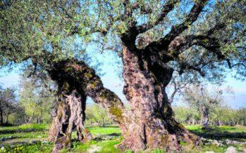 Puglia.Storie di ulivi e di contadini resistenti