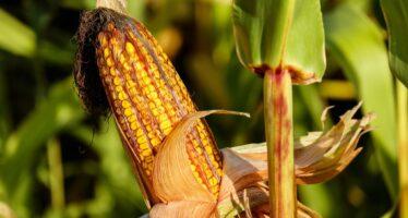 Commissione UE vuole 43 miliardi di tagli alla politica agricola, sei paesi in rivolta