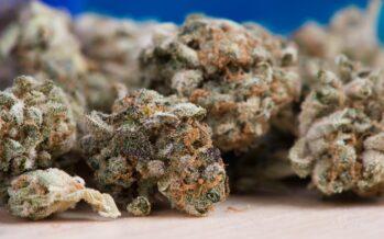 Cannabis light store, torna il proibizionismo