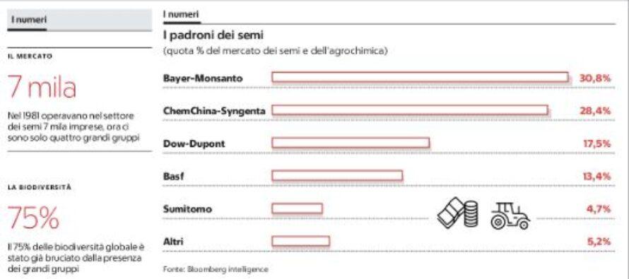 Fusione Bayer- Monsanto, ancora più forte il monopolio dei semi