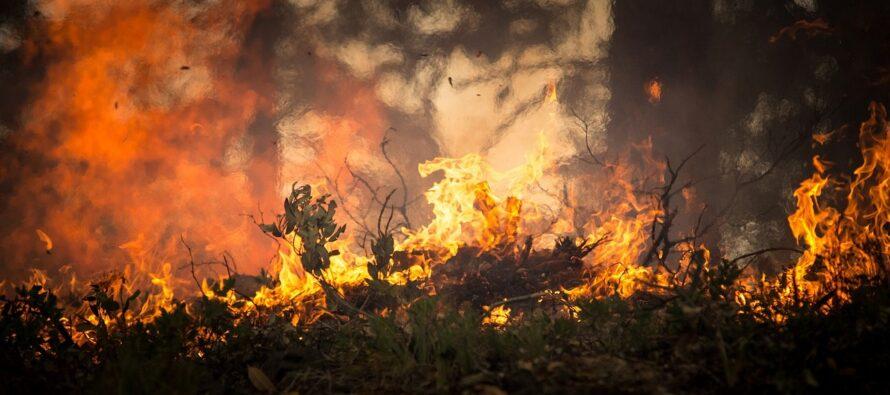 Disastro ecologico in Sardegna: entroterra in cenere, apocalisse di fuoco