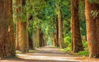 Magnate inglese lascia una verde eredità: 10 milioni di nuovi alberi