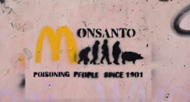 Crollo in borsa per la Bayer dopo la condanna della Monsanto sul glifosato