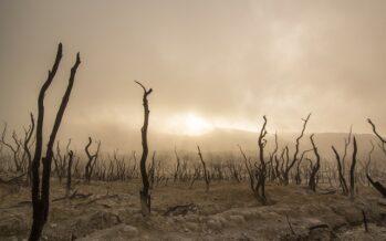 Rapporto Fao.La carestia in tempo di guerra, in fuga da bombe e siccità