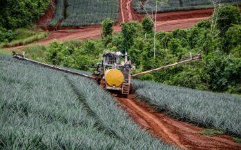 El lado amargo de la dulzura: a propósito de un reciente reportaje crítico de lFrance2 sobre la piña costarricense