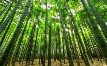 Etiopia. In un solo giorno piantati 200 milioni di alberi
