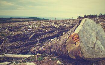 L'Amazzonia sotto attacco degli speculatori e Bolsonaro arresta gli ambientalisti