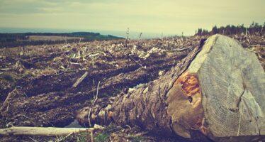 Brasile. Allarme deforestazione in Amazzonia, i Governatori contro Bolsonaro